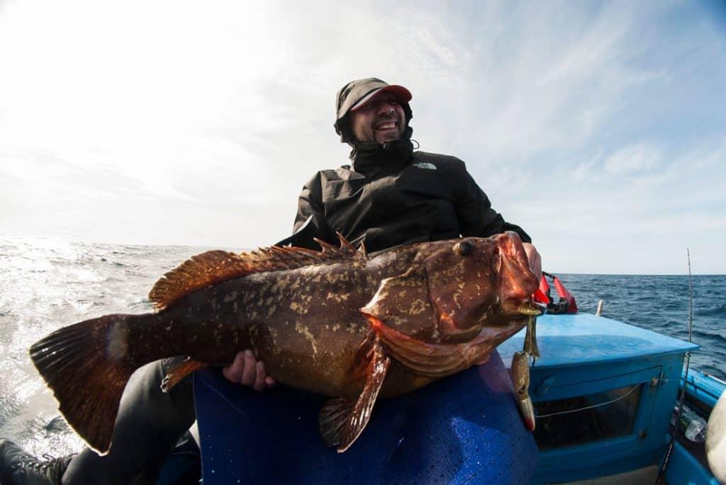 grouper 8